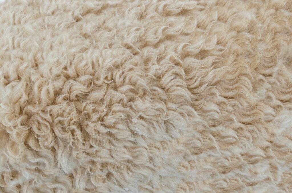 Haal sfeer en warmte in huis met een wollen vloerkleed